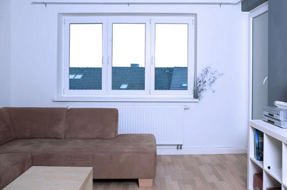 anti schimmel renovierung auf trockenen w nden haben die sporen keine chance ratgeberbox. Black Bedroom Furniture Sets. Home Design Ideas