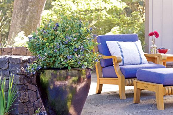 blaubeeren kann man jetzt auch auf der terrasse oder dem balkon ernten ratgeberbox tipps. Black Bedroom Furniture Sets. Home Design Ideas