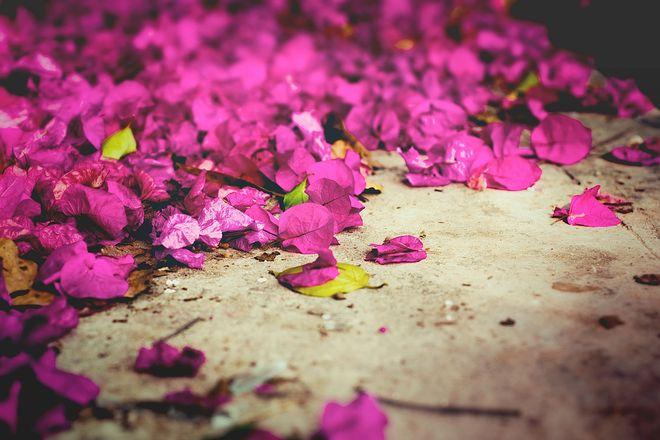Mit einer Bildbearbeitungssoftware können Hobbyfotografen mit wenigen Mausklicks die Eigenschaften ihrer Fotos verändern und Farben beispielsweise leuchtender erscheinen lassen.