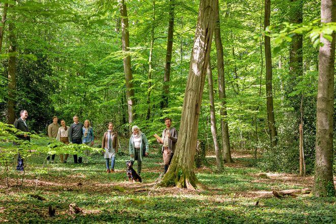 Wenn sich Freunde und Familien gemeinsam in freier Natur bestatten lassen wollen, können sie einen Familienbaum auswählen. Ein Förster hilft bei der Orientierung im Wald.