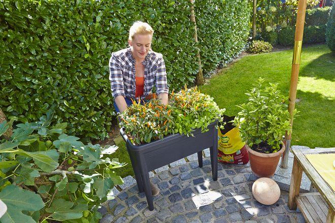 Für Hochbeete gibt es im Gartenfachhandel aufeinander abgestimmte Erden und Materialien für den Unterbau, die Vegetationsschicht und zum Mulchen als Verdunstungsschutz.