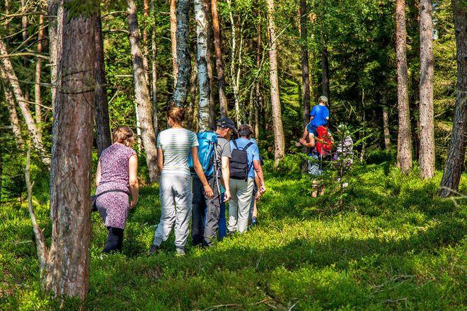 Die Moorwanderung führt durch die skandinavisch anmutende Landschaft des Schönramer Filzes.