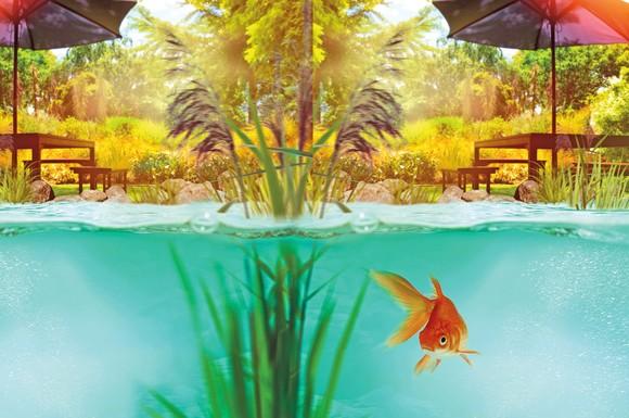 Tipps Für Ungetrübte Freude Am Teich So Bleibt Das Wasser Auch Im
