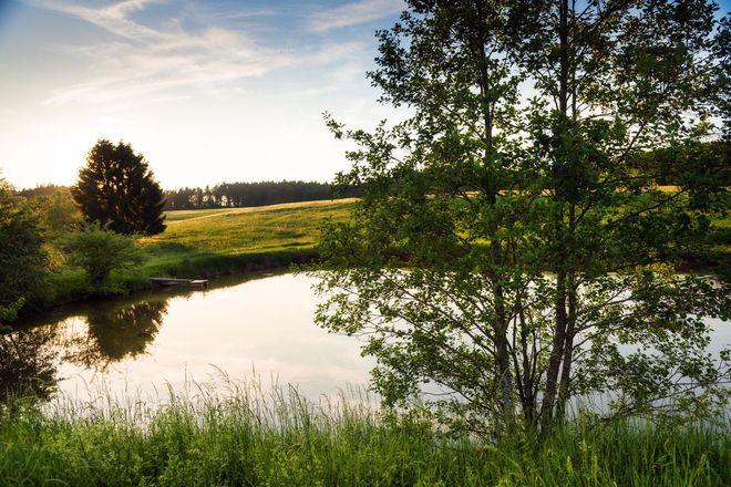 In den Teichen im Feuchtwanger Land wachsen viele Fischspezialitäten heran, unter anderem der Karpfen.